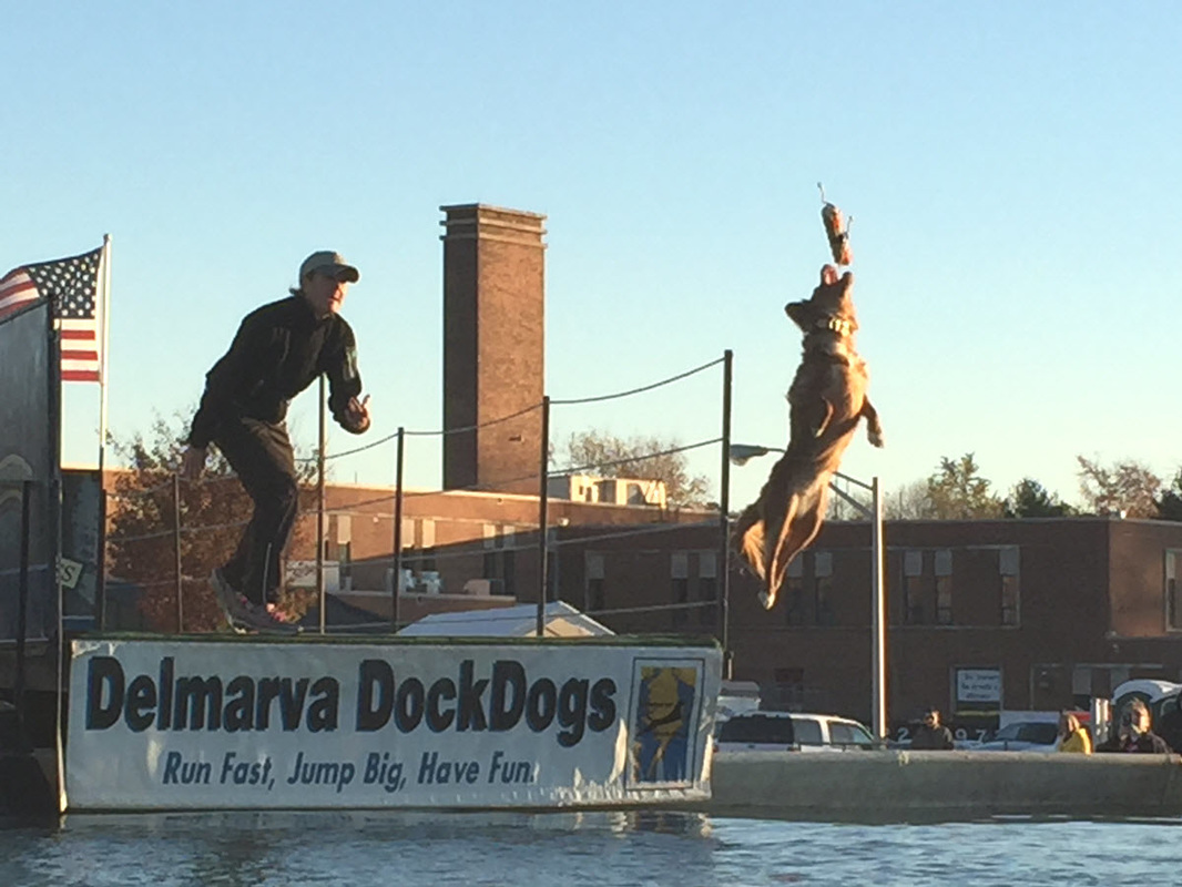 Dock Dogs Competition at Waterfowl Festival